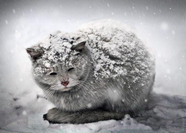 gatto-freddo