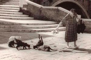 gatti e gattare