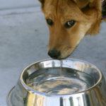 Ho sete!