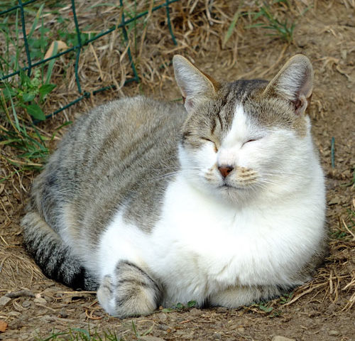 Adotta un gatto, anche a distanza!