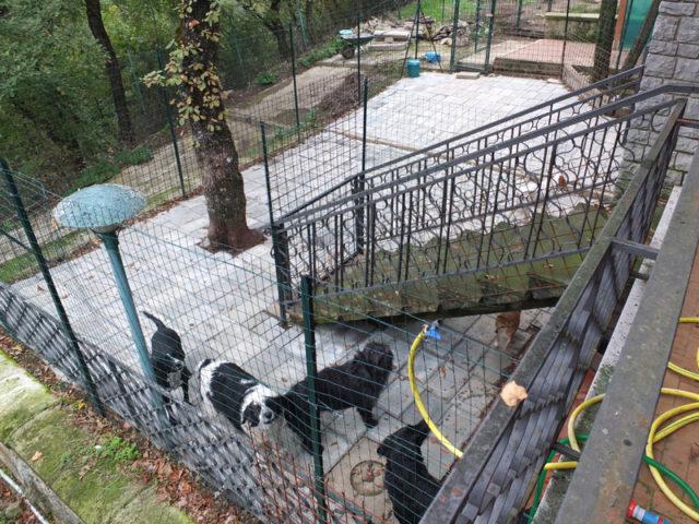 la terrazza dei cani