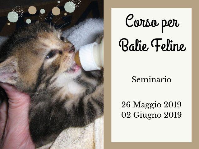 Corso per Balie Feline