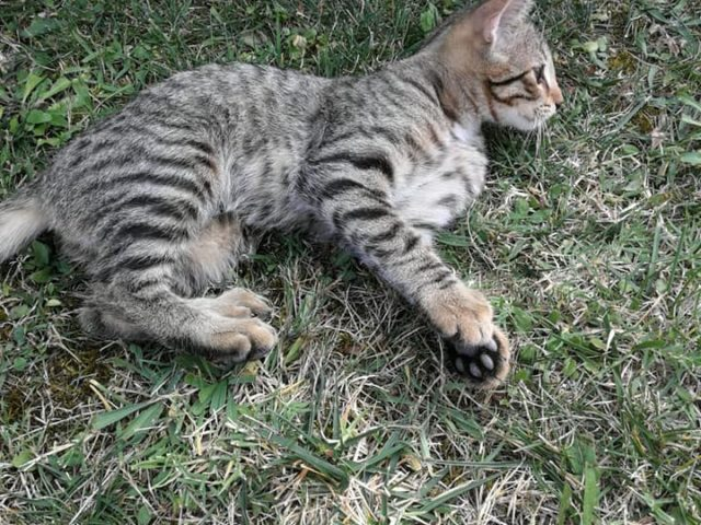 Gattini cercano casa